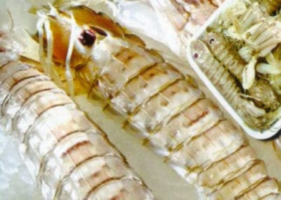 Mantis Shrimp Zavogarida